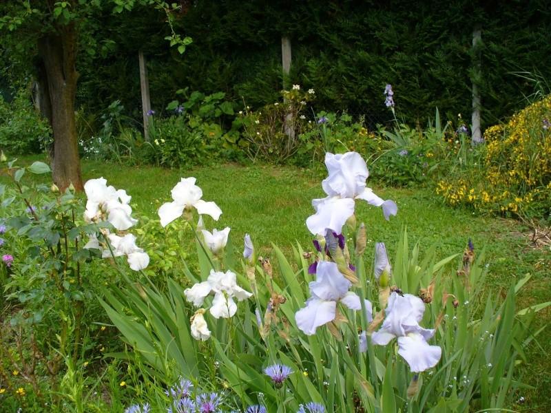 Cultivons notre jardin. Iris010