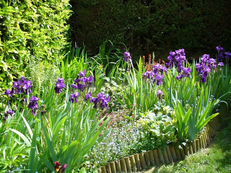 Cultivons notre jardin. Iris110