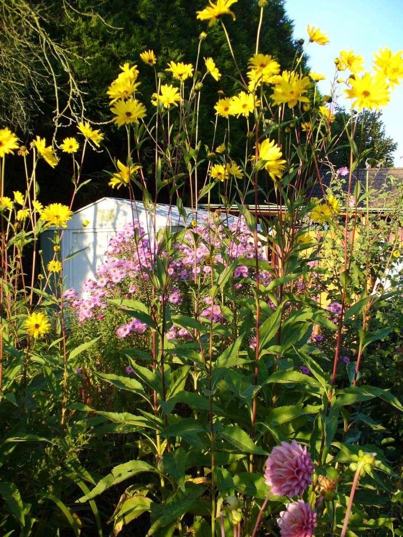 Le jardin à la fin de l'été Jardin15