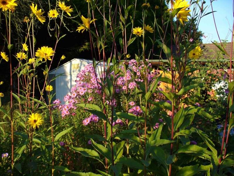 Le jardin à la fin de l'été Jardin16