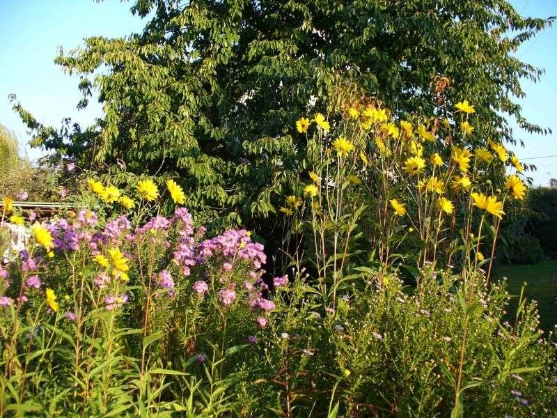 Le jardin à la fin de l'été Jardin17