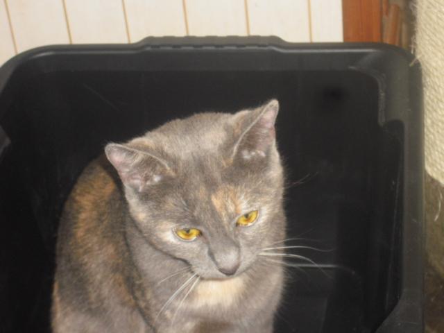Juliette (-1an) adorable trouvé au bord de l'autoroute  - Page 2 00511