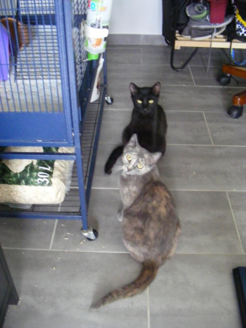 Lyna et Jerry, 2ans, deux chats/chiens 00712