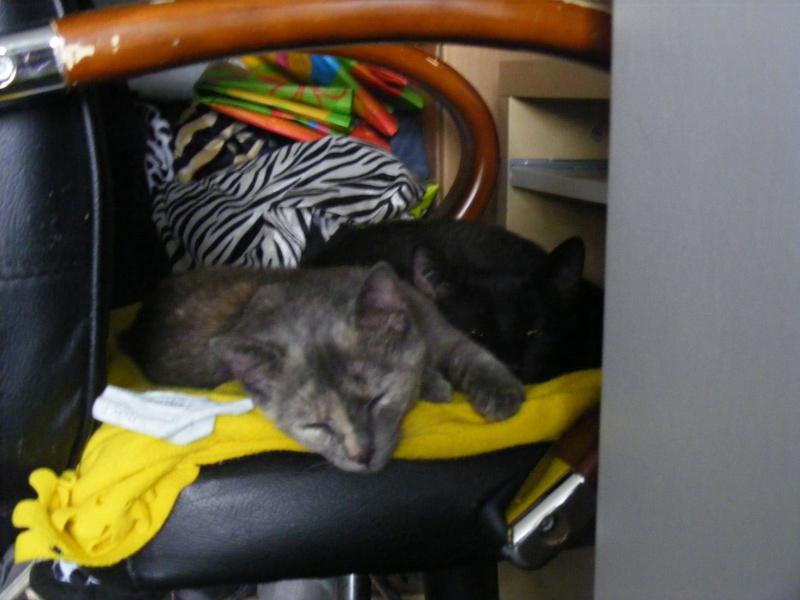 Lyna et Jerry, 2ans, deux chats/chiens 01810