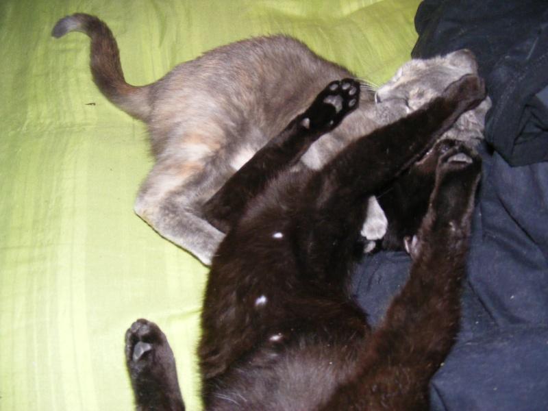 Lyna et Jerry, 2ans, deux chats/chiens 03513