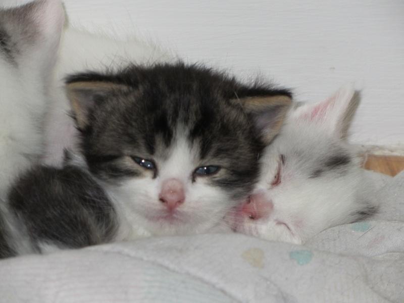 Brioche et les patisseries peuvent être réservés...adoption début Juillet 07510