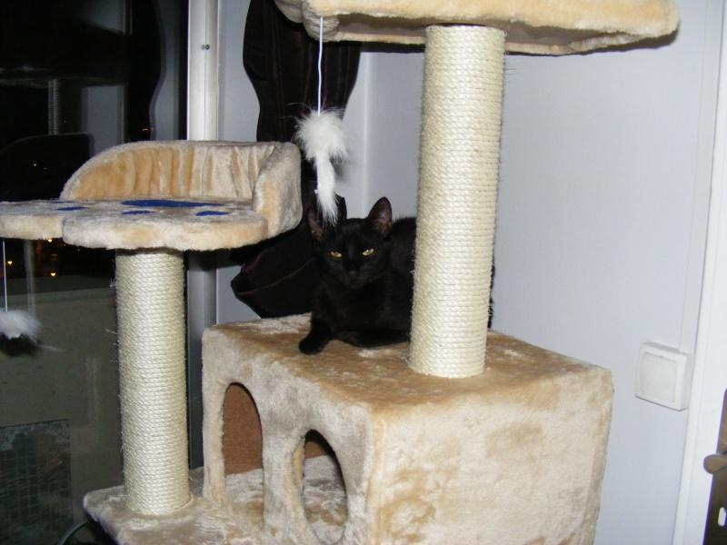 Lyna et Jerry, 2ans, deux chats/chiens 07810
