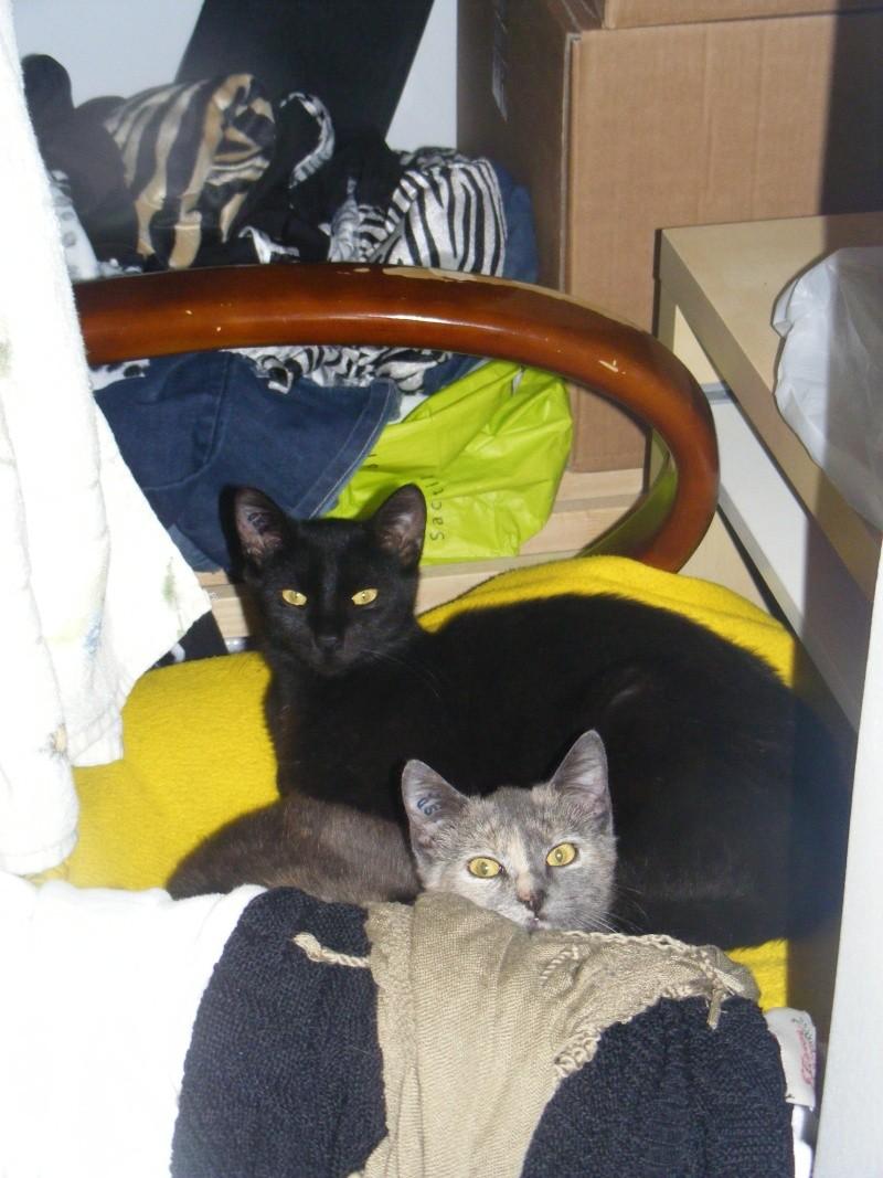 Lyna et Jerry, 2ans, deux chats/chiens 26410