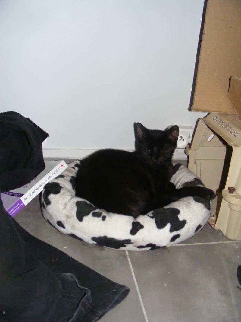 Lyna et Jerry, 2ans, deux chats/chiens 27110