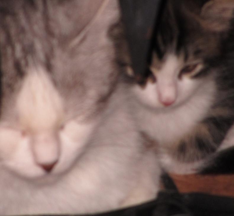 Brioche et les patisseries peuvent être réservés...adoption début Juillet Brioch13