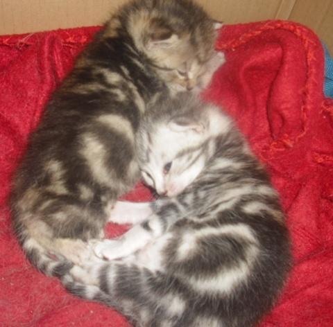 Themys 1 an et ses filles 2 mois (peuvent être réservées) Calyps12