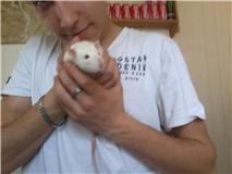 4 ratous du sauvetage des 34 rats Diabol10