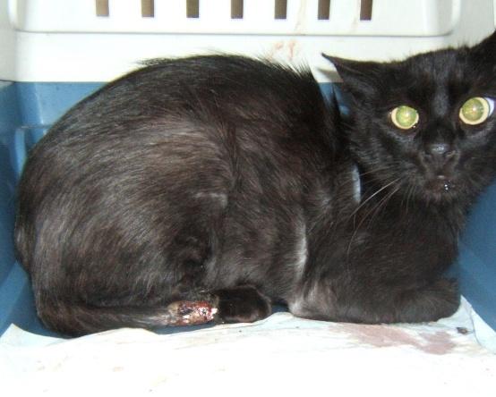 Kawa 2.5ans, handicapé...petit chat ...(presque) parfait^^ Kawa_e10