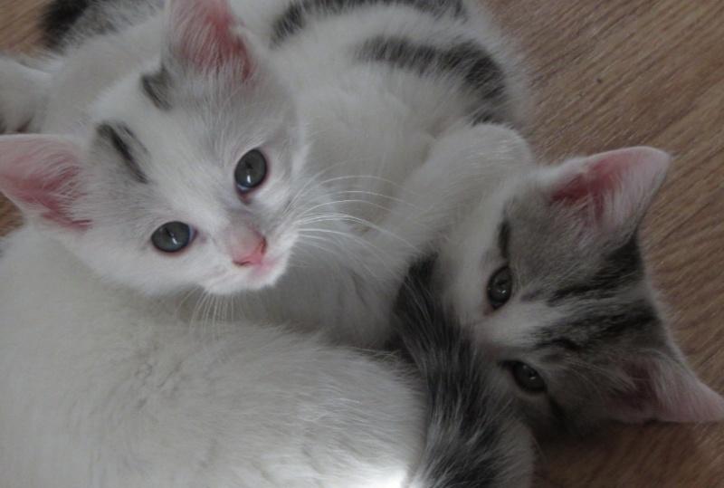 Brioche et les patisseries peuvent être réservés...adoption début Juillet Mering10