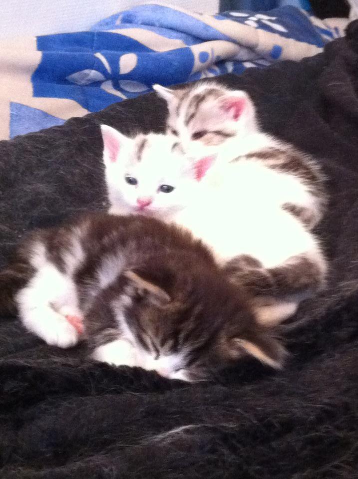 Brioche et les patisseries peuvent être réservés...adoption début Juillet Milka_11