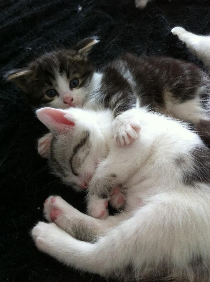 Brioche et les patisseries peuvent être réservés...adoption début Juillet Milka_13