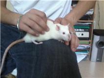 4 ratous du sauvetage des 34 rats Nestea10