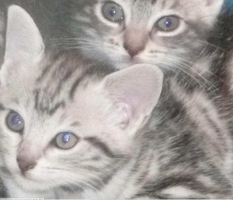 Themys 1 an et ses filles 2 mois (peuvent être réservées) Selene11