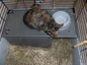 diego 5/6 mois recherche une famille (lapin) 03310