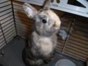 diego 5/6 mois recherche une famille (lapin) 03510