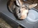 diego 5/6 mois recherche une famille (lapin) 03710