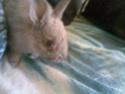 Une FA pour pimprennelle (lapine) svp 28052010