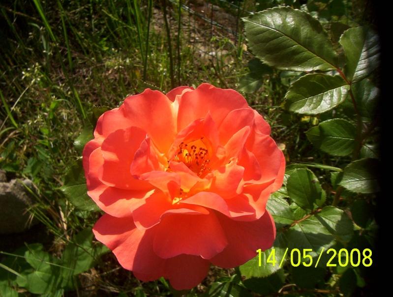 Thème du mois de Mai 'Le renouveau du printemps' Photo_58