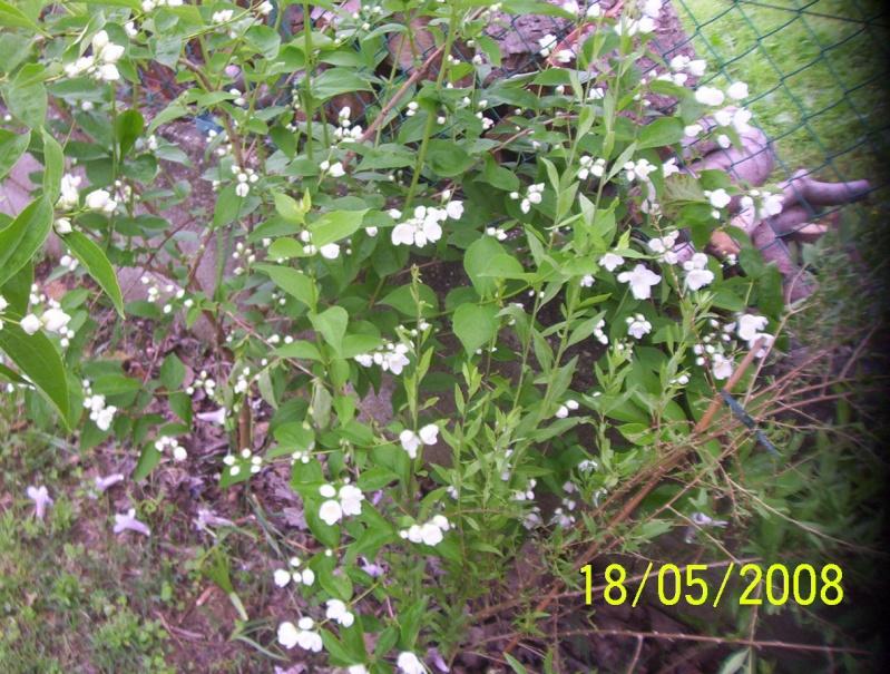 Thème du mois de Mai 'Le renouveau du printemps' Photo_60