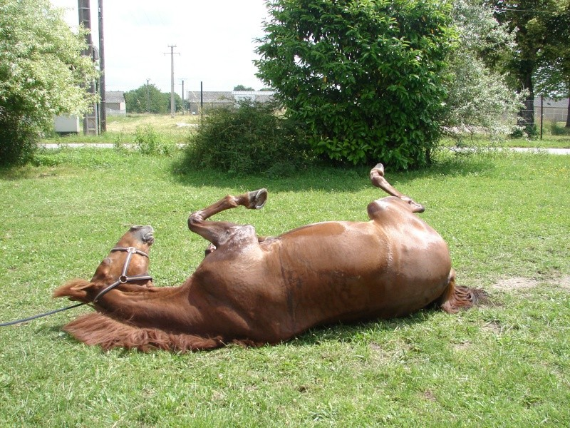 Vos plus belles grimaces de cheval et photos gag .... Dsc00030