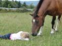 (dpt 23)PRINCUS, âne typé catalan de 5 ans, entier en FA chez Banzina Dsc01315