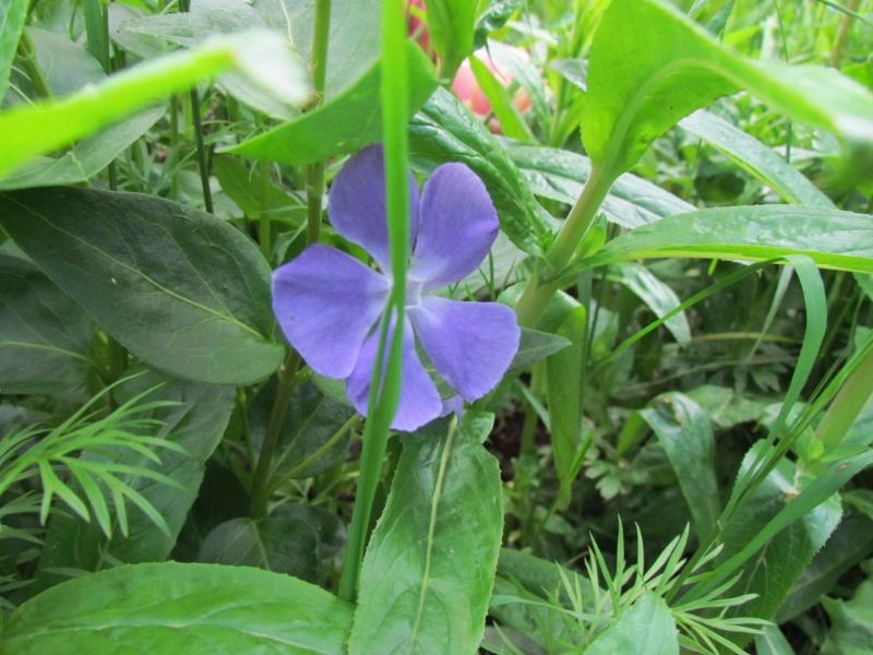 toutes les fleurs de couleur violette, bleue,  1038