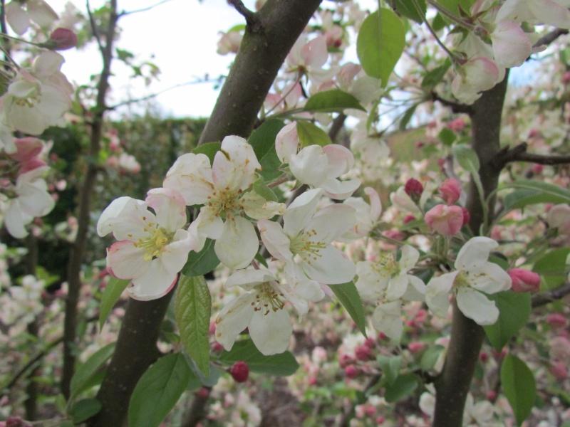 toutes les fleurs de couleur blanche  1137