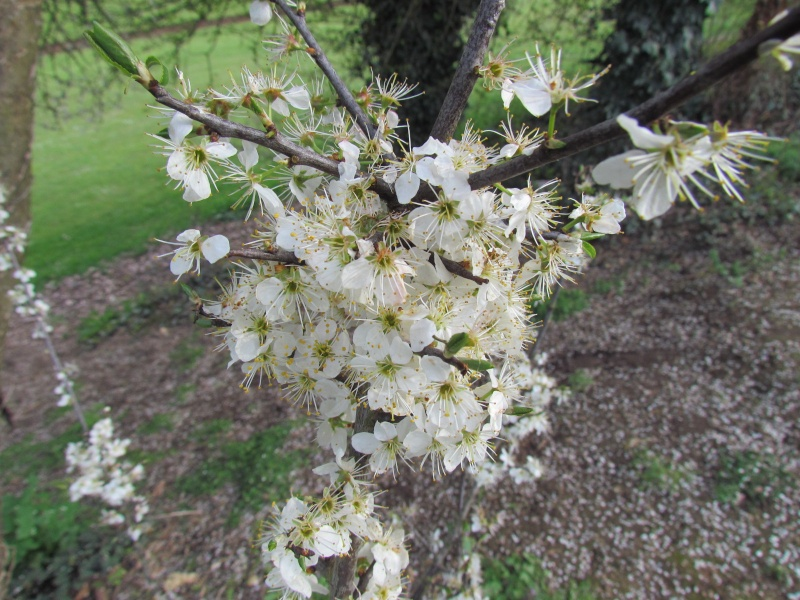 toutes les fleurs de couleur blanche  1330