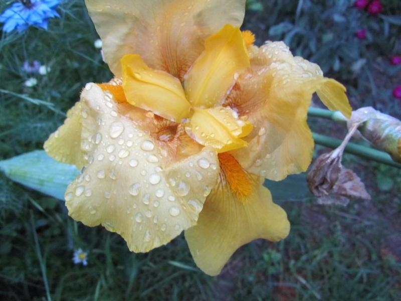Toutes les fleurs de couleur jaune 1331