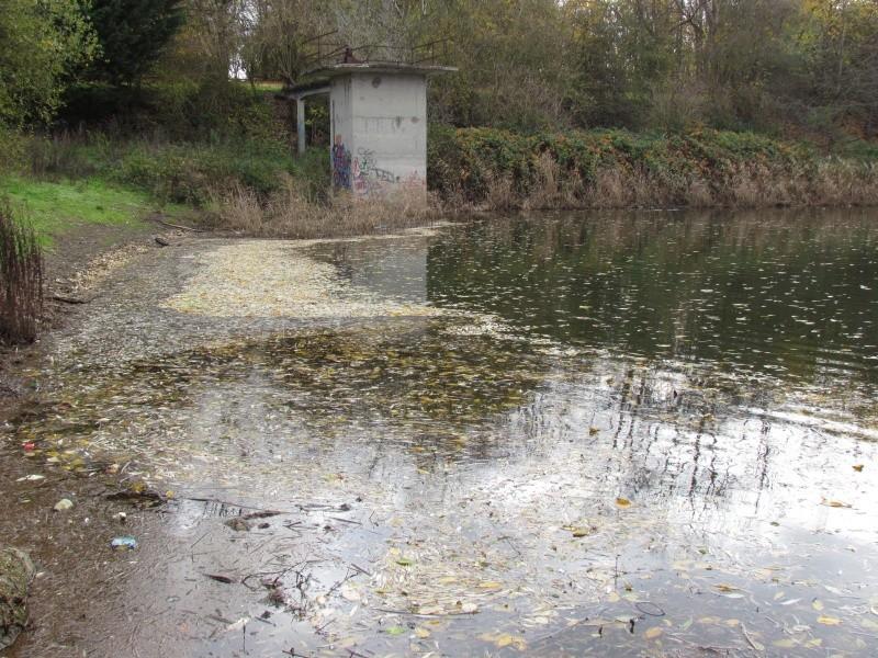 ils ont pollué, mon lac.......... - Page 3 1333