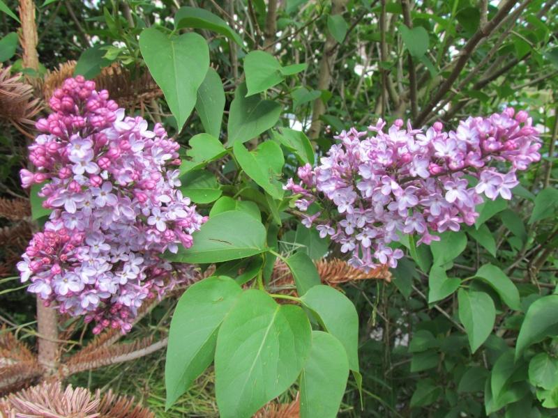 toutes les fleurs de couleur violette, bleue,  173