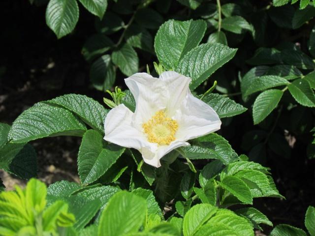 toutes les fleurs de couleur blanche  22_210