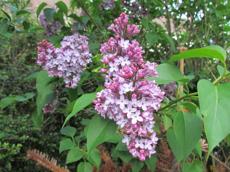 toutes les fleurs de couleur violette, bleue,  268