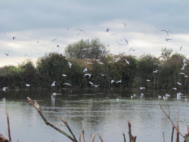 une digue qui lâche, une communauté d oiseaux qui s installe 3314