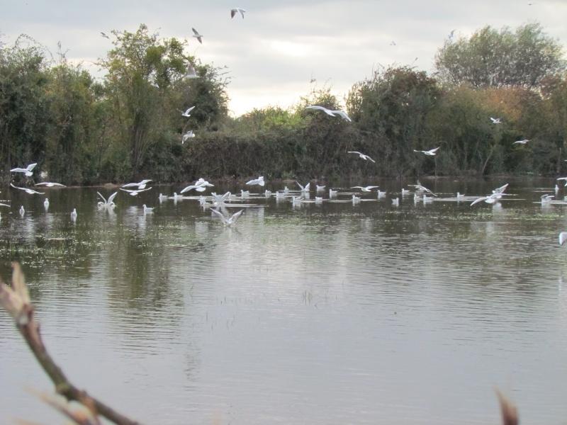 une digue qui lâche, une communauté d oiseaux qui s installe 3412