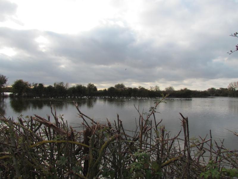 une digue qui lâche, une communauté d oiseaux qui s installe 3613