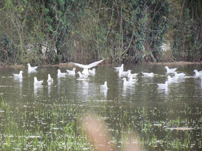 une digue qui lâche, une communauté d oiseaux qui s installe 3712