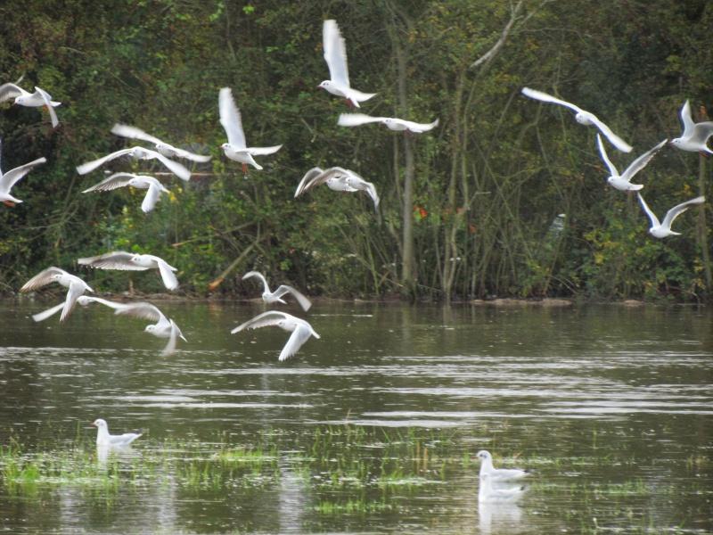 une digue qui lâche, une communauté d oiseaux qui s installe 3914
