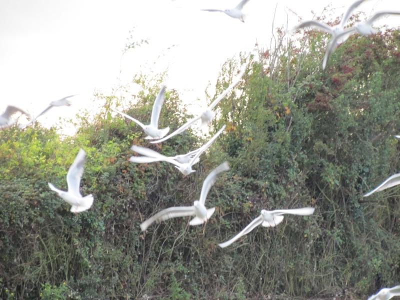 une digue qui lâche, une communauté d oiseaux qui s installe 4012