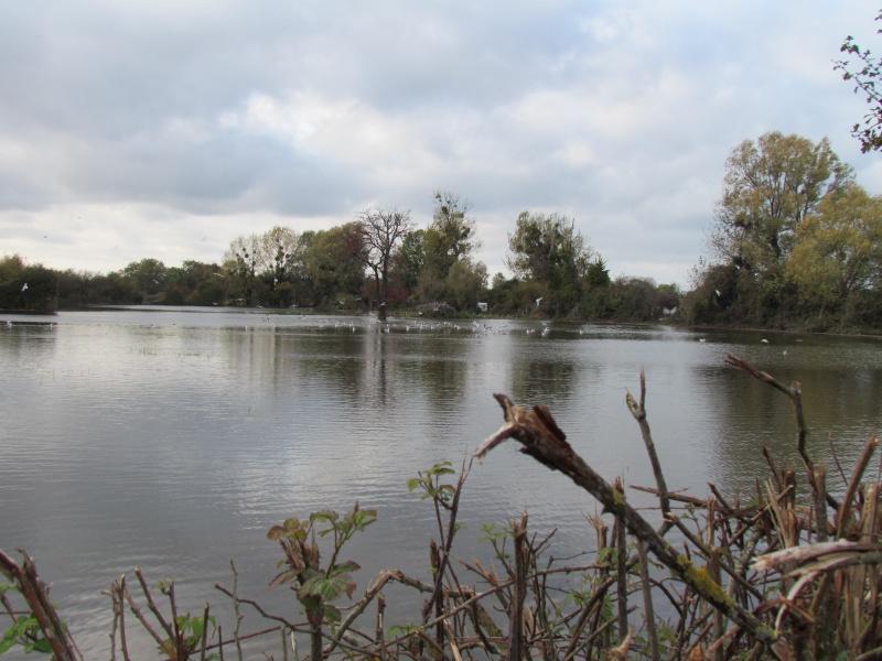 une digue qui lâche, une communauté d oiseaux qui s installe 4113