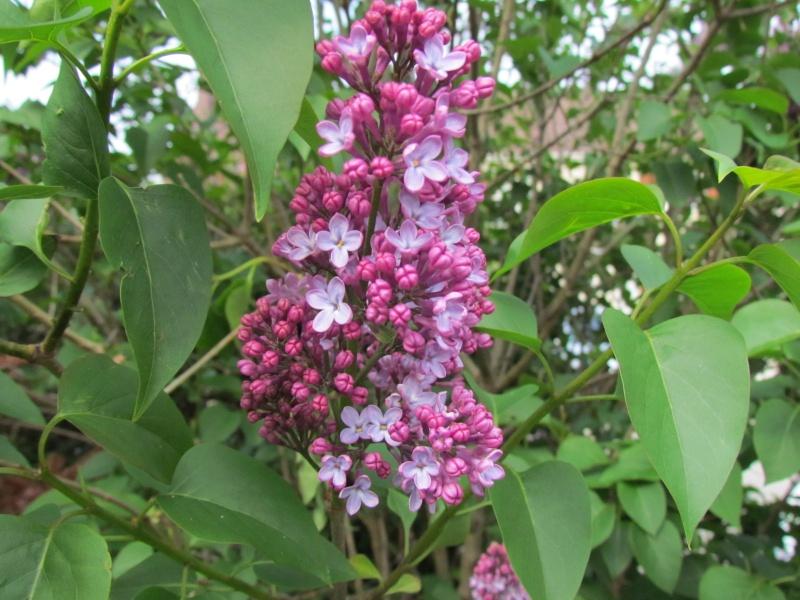 toutes les fleurs de couleur violette, bleue,  457