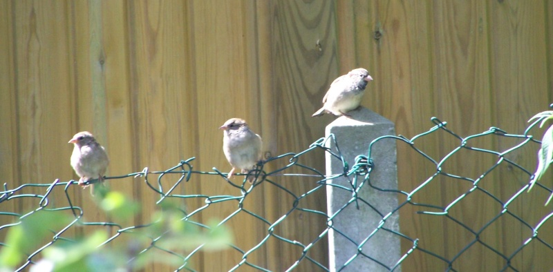 maud  et ses oiseaux 4_sept16