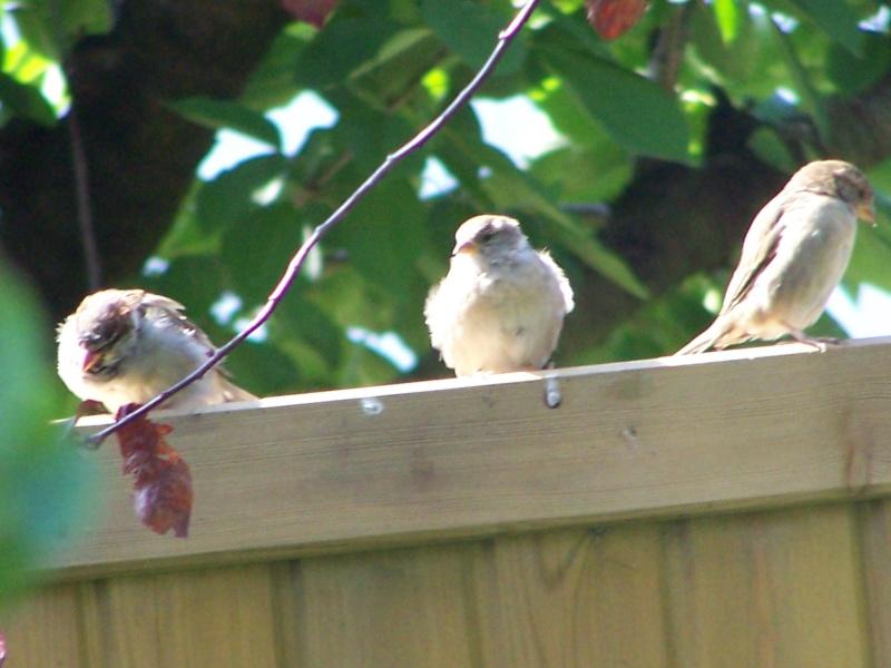 maud  et ses oiseaux 4_sept17