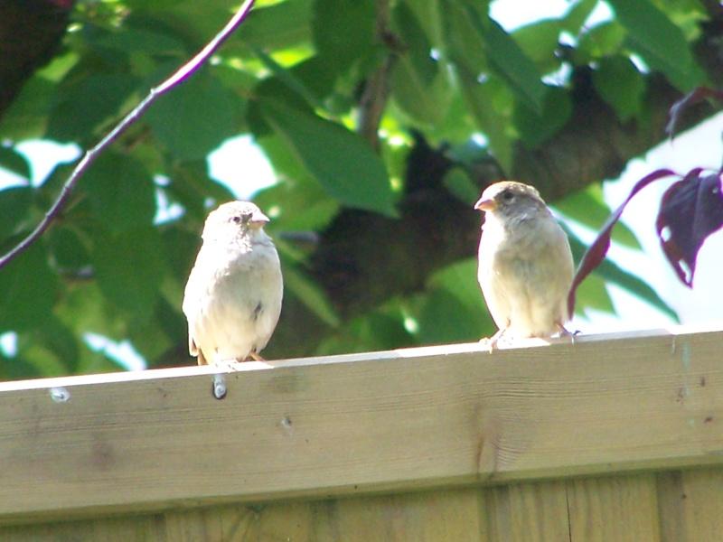maud  et ses oiseaux 4_sept18