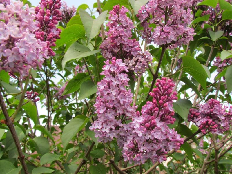 toutes les fleurs de couleur violette, bleue,  651